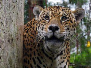 Gramado Zoo - Divulgação