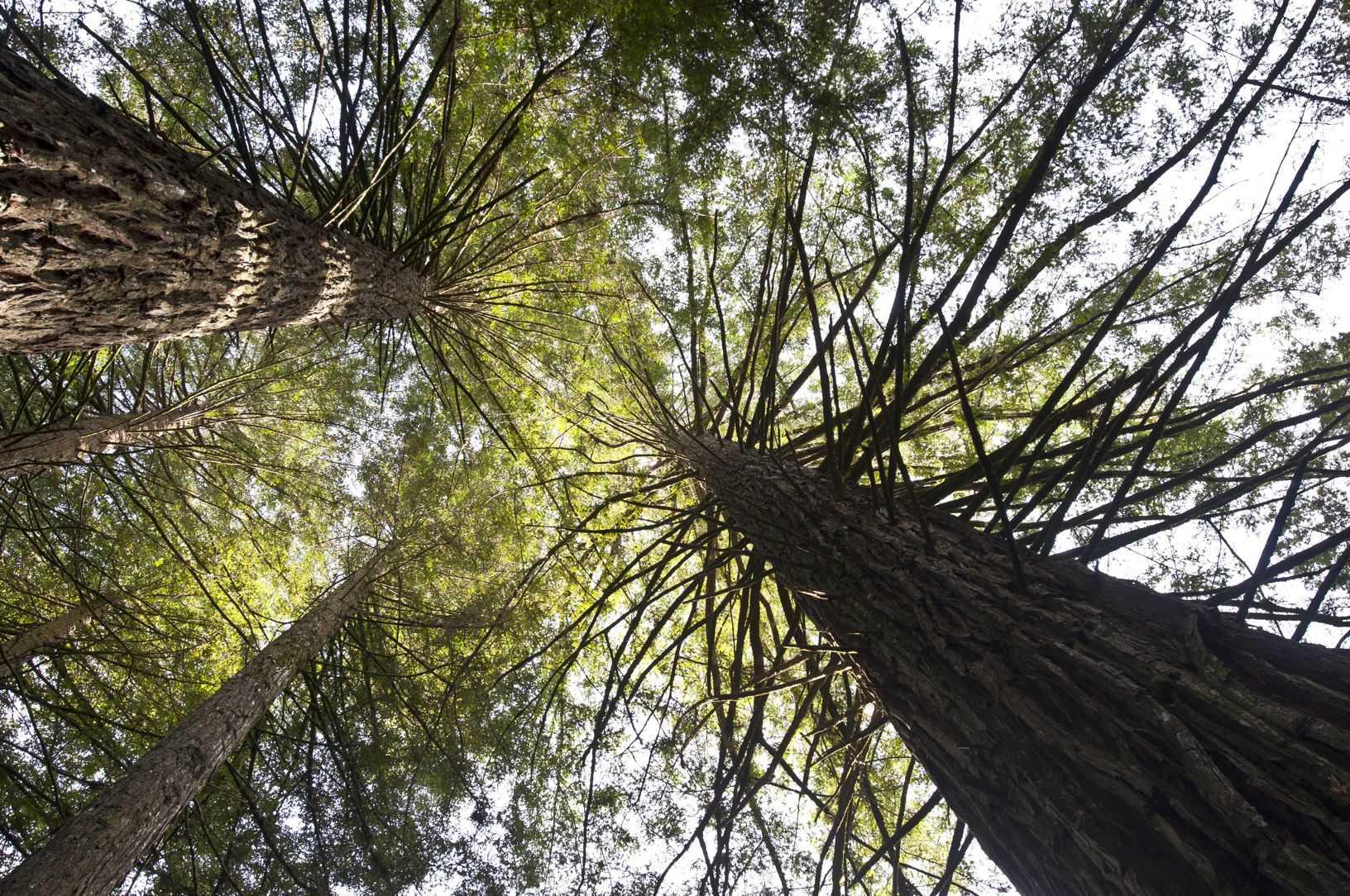 Parque das Sequoias - Divulgação